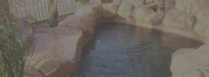 Koi Ponds Fish Ponds